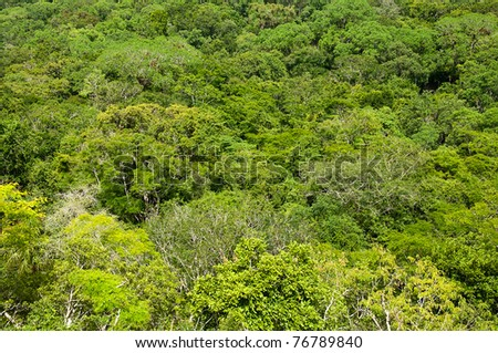 The Top of the Canopy of the Rainforest in Belize