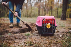 The topic of burial of pets is not legal. Man digs hole with shovel for burying an animal in the forest. The owner makes the grave with a shovel, digs a hole in the ground to bury the deceased cat.