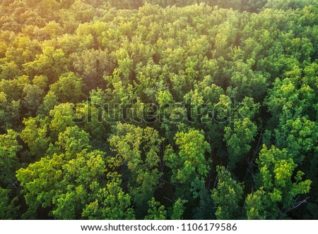 The tops of an oak forest. A view of the trees from a bird's-eye view. #1106179586