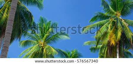 The tops of palm trees on a clear blue sky #576567340