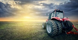 The tractor works in the field against the background of sunset.