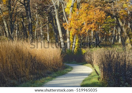 The trail at Oldfield Oaks Forest Preserve in DuPage County, Illinois winds through an autumn colored forest.
