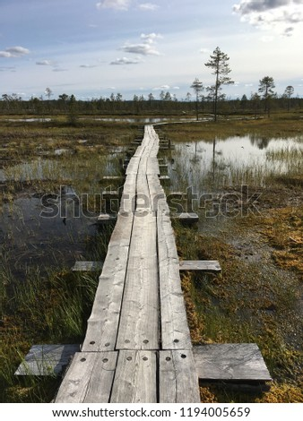 the trail passes through the swamp in the tundra beyond the Arctic Circle ( Puha - Luosto national park, Finland) Stock fotó ©