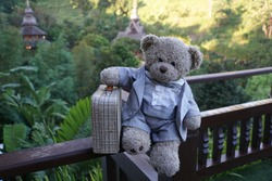 The travel of the teddy - Teddy bear with suitcase under palm trees in Chiang Mai, Thailand.