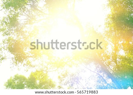 the tree and sunlight backgrounds #565719883