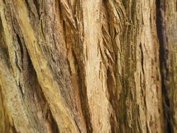 The tree bark wood hard texture background
