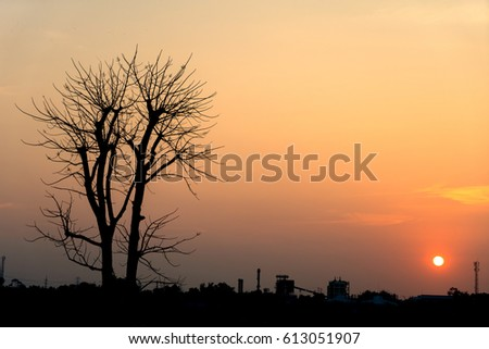 The tree died in the evening sky at sunset time.