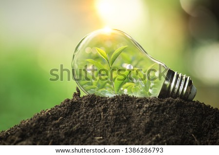 The tree growing on the soil in a light bulb. Creative ideas of earth day or save energy and environment concept #1386286793