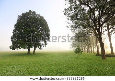 The tree in the morning - Shutterstock ID 558981295