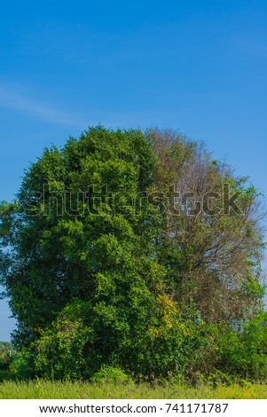 Free Photos Half Dead Half Alive Tree Avopixcom
