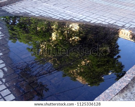 The tree is reflected in a puddle #1125336128