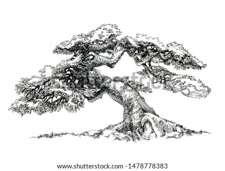 The tree of life. Small tree. Drawing ink.