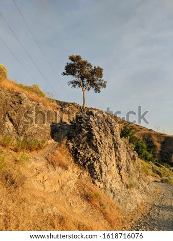 The tree of perseverance. Pushing through the tough terrain and growing despite the struggle.