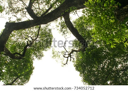 the tree on white background