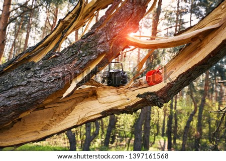 The tree that hit the lightning at a campsite in the forest. #1397161568
