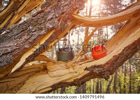 The tree that hit the lightning at a campsite in the forest. #1409791496