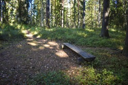 The trees and the bench. The wooden bench in the middle of the forest was created as a stop and resting area for hikers.