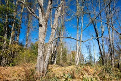The trees are leafless along the Putnam Trailway in Brewster, N.Y.
