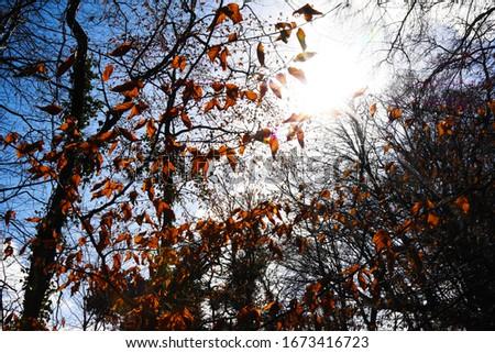 The Trees in the Sunlight in Belleek Forest. Stok fotoğraf ©