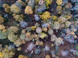 The trees of Sherwood Forest taken from above in Nottinghamshire, UK