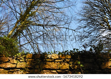 The Trees over an Old Ruin in Belleek Forest. Stok fotoğraf ©