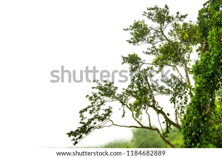 The trees.Rocks and Stone on the Mountain .Isolated on White background #1184682889