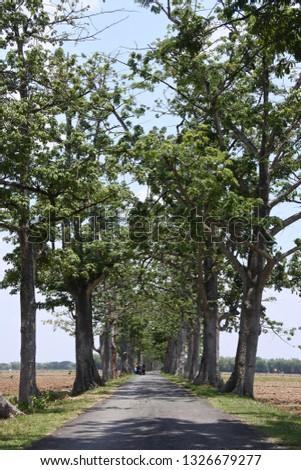 the trees split the road