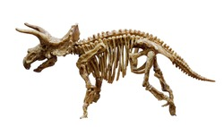 The Triceratops skeleton mount, Dinosaur with three horns.