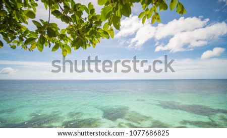 The tropical coast of the island of Bohol with corals and overhanging branches of a tree. Philippines.