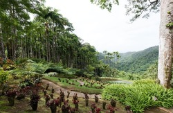 The tropical garden located near Fort-de-France, Martinique, French West Indies.