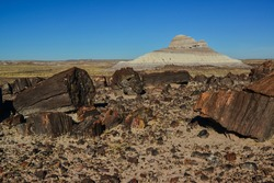 The trunks of petrified trees, multi-colored crystals of minerals. Petrified Forest National Park, Arizona