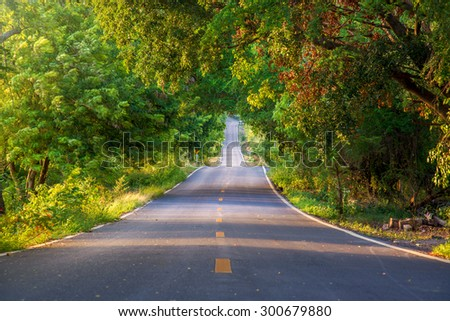 The tunnel of trees and empty road
