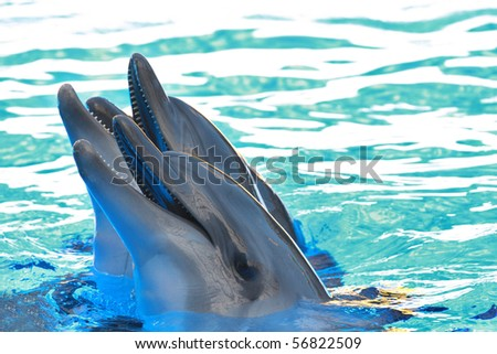 the two beautiful blue dolphins and water