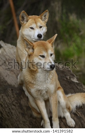 the two dogs are sitting on a log