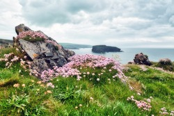 The typical landscape of the burren region in Ireland: Colorful flowers growing on the rocks. The wild sea is in the background. Wild Atlantic Way. Europe