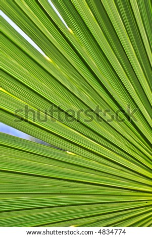 The underside of a green palm leaf.