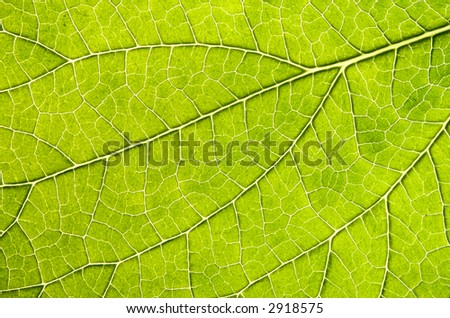 The underside of a leaf very close up reveals the veins and patterns that make it up.