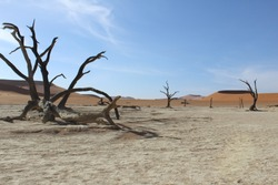 The unique Deadvlei in Namibia. Part of the Sossusvlei. Best of Africa!