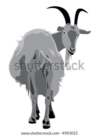 The vector image of a goat which has looked back. The raster version
