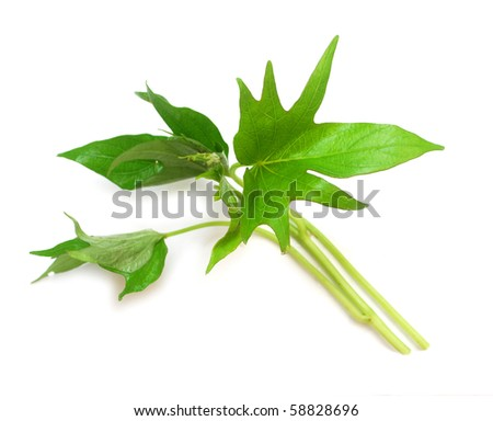 leaves belacan yam leaf potato leaves belacan yam sweet potato leaves ...