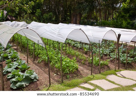 The vegetables, which protects the roof with plastic globe