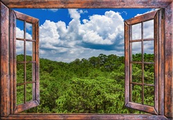 the view from the open window to the jungle nature green summer