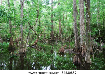 The view of Big Cypress swamp in Everglades national park (Florida).