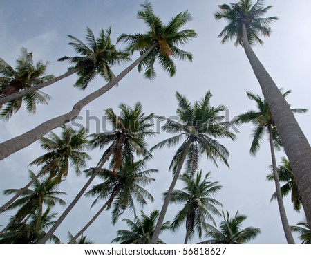 The view of coconut trees