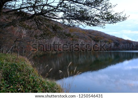 The view of the autumn lake shore reflecting the forest trees and the sky on the water surface #1250546431