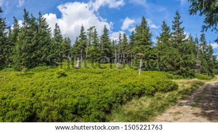 The view of the pine forest on the hiking trail in national park Jeseniky Mountains, (Hrubý Jeseník). Czech Republic. #1505221763
