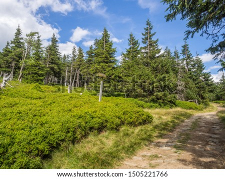 The view of the pine forest on the hiking trail in national park Jeseniky Mountains, (Hrubý Jeseník). Czech Republic. #1505221766