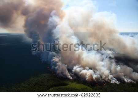 The View of wildfire on height of the flight of the bird.
