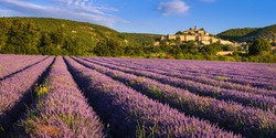 The village of Banon in Provence with lavender fields at sunrise in summer. Alpes-de-Haute-Provence, French Alps, France