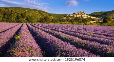 The village of Banon in Provence with lavender fields at sunrise in summer. Alpes-de-Haute-Provence, French Alps, France Stock photo ©